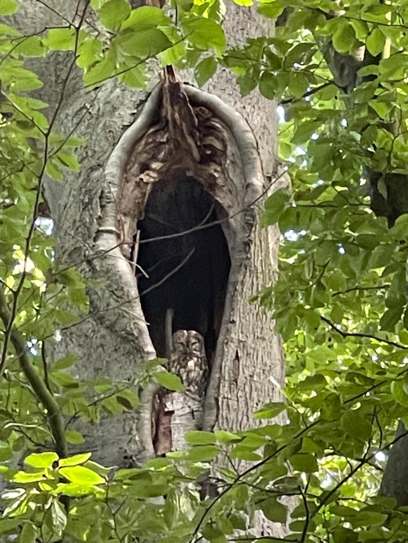 """,,Leersum, zondag 15 augustus om 9.00 uur in een van de nog opengestelde delen van het bos. Er zijn dus nog uilen, want veel oude bomen zijn er niet meer."""" Ben Kamphuis © BDU"""