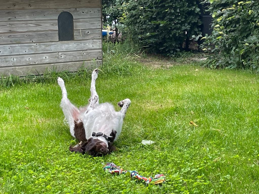 Op de foto staat een genietende en relaxte heidewachtel Bram in onze zonnige tuin aan de Leusbroekerweg. De foto is gemaakt op 9 juli 2021. Margot de Vaan © BDU media
