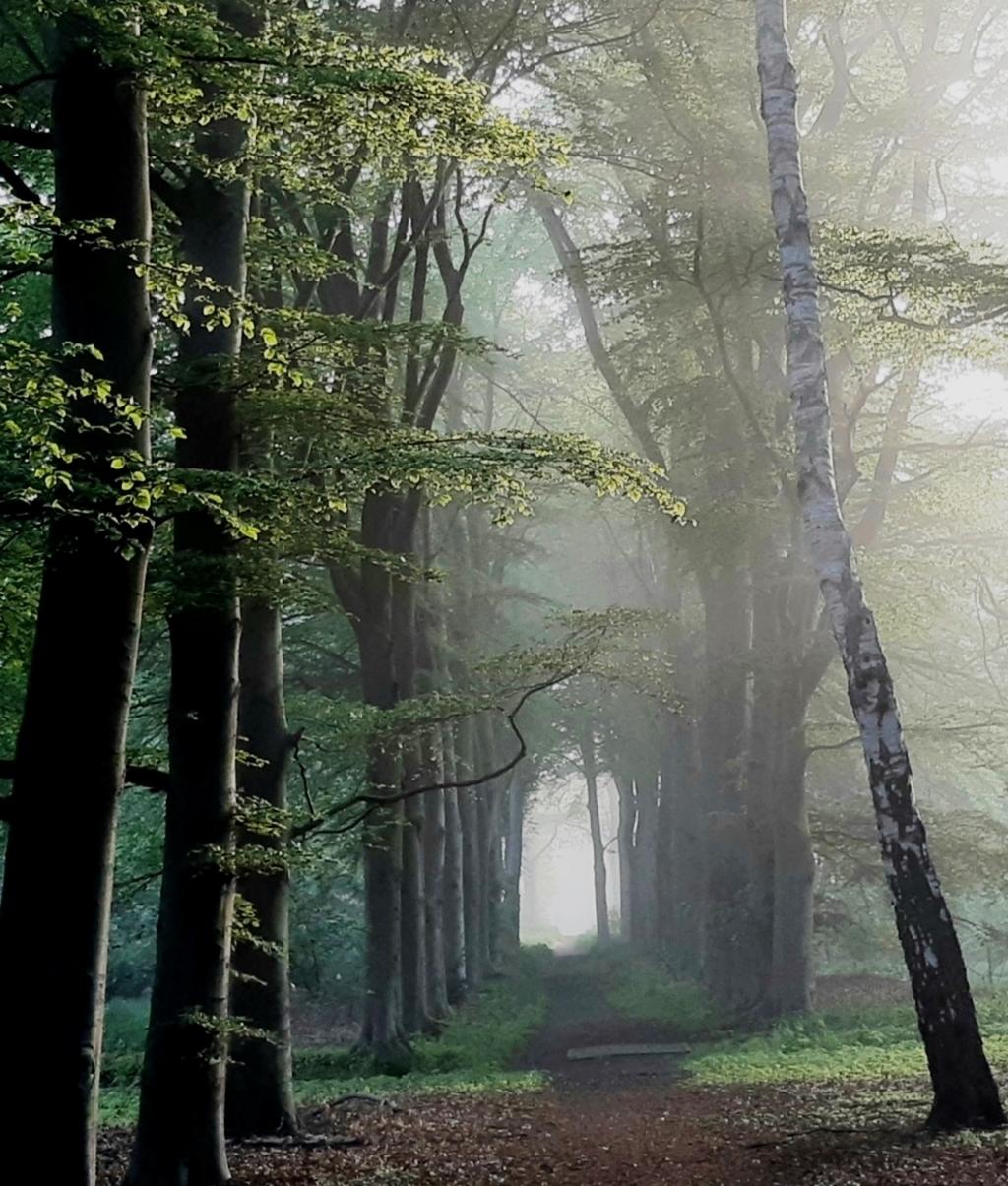 Tijdens een vroege ochtendwandeling in het Bos bij Bartimeus, op 28 mei 2021 (6:30 uur) werd de dauw in het bos langzaam verdreven door het licht en de zon.  Anneke Sontrop © BDU