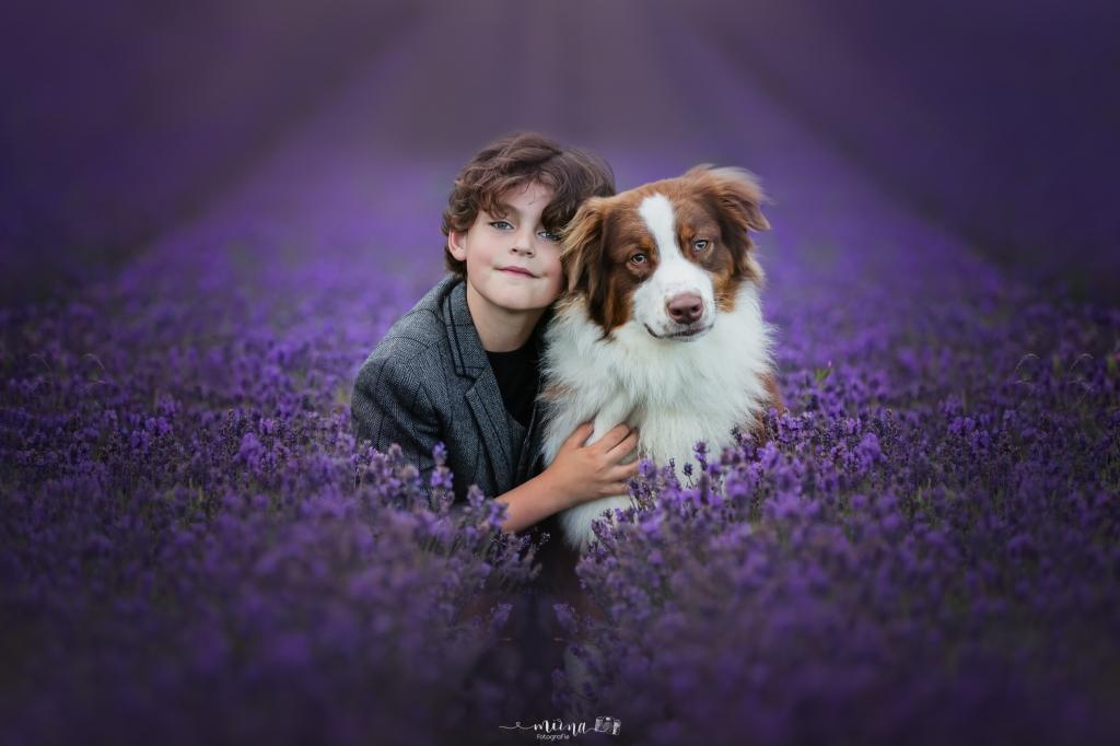 Max te zien in het lavendelveld bij Lady Lavendel, in Noordwijk, samen met zijn hond, een Australian Shepherd, Bumper. Het lijkt wel de Provence. Mirna Tiele // Mirna Fotografie © BDU