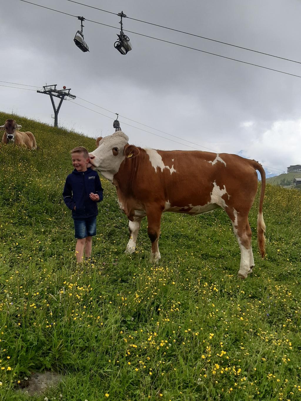 Kalverliefde met onze zoon Gert in Tröpolach (Oostenrijk).  Henriëtte Brouwer © BDU Media