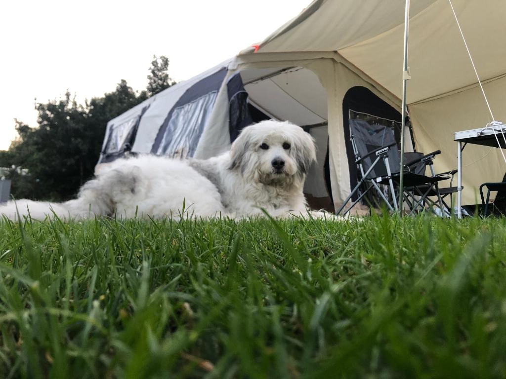Hond Milo is klaar voor een weekje kamperen in Hardenberg, juli 2021. Anneke Uijt de Boogaardt  © BDU Media