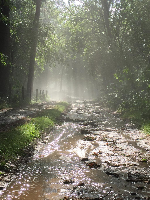 """18 juni: ,,Opeens was er op die zomerse dag storm, hagel en noodweer. En net zo snel was het over. Ik ging in ons bos de schade bekijken. Geblokkeerde toegangswegen en een aantal omgevallen bomen, het leek mee te vallen. De sfeer van de Utrechtse Baan was onverwacht magisch: strálend zonnig, diepgroen, vochtige damp opstijgend uit de warme vochtige aarde, glinsterende snelstromende beekjes, uitbundige natuur in een intense stilte. Niet veel later begon geleidelijk aanzwellend het helse kabaal van de cirkelende helikopters, de sirenes en de kettingzagen."""" Aafje Rietveld © BDU"""