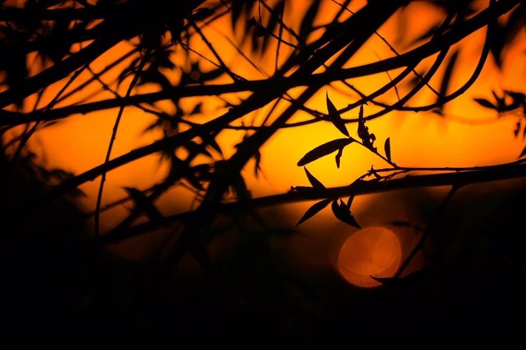 De foto is zondagavond 18 juli gemaakt op de oprit naar de vlindertuin in Leusden. Linda Schenk © BDU media