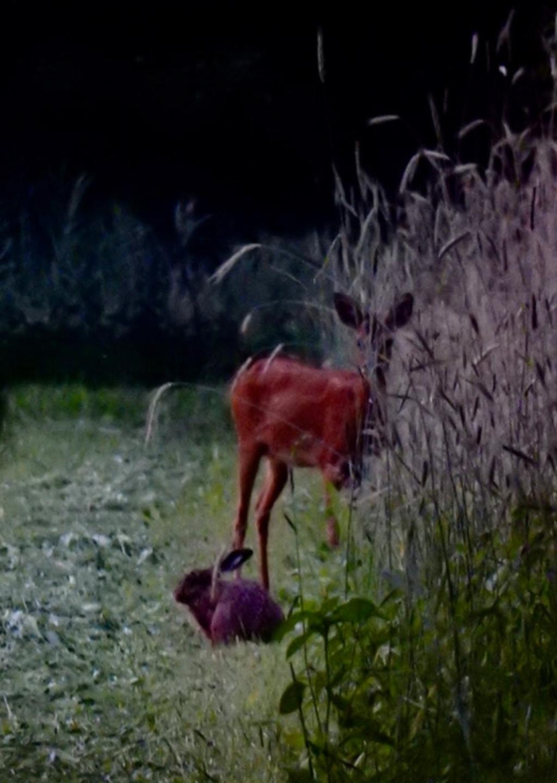 'Er waren eens een ree en een haas op een mooie zomeravond in ons sprookjesbos Den Treek.' Jolanda de Graaff © BDU media