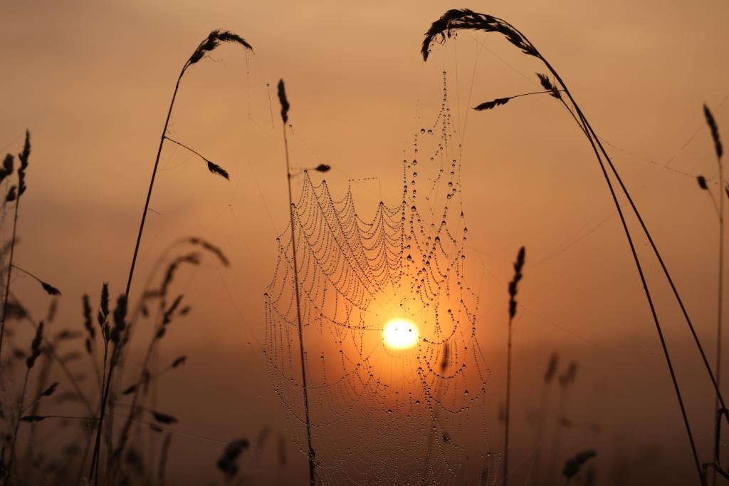 'Zonsopgang gevangen in web', gemaakt op 21 augustus bij zonsopgang op het veld achter het Grote Bos in Stameren/Doorn.  Elfriede Kooreman © BDU