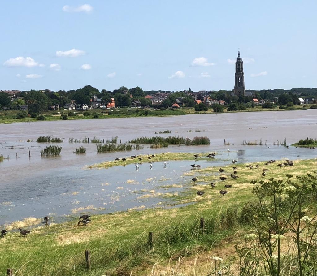 Zicht op Rhenen en de Rijn tijdens de hoge waterstand van de afgelopen dagen. Foto is op zondag 18 juli jl gemaakt. De 4 witte vogels op de voorgrond zijn lepelaars.  Riky Roelofs © BDU