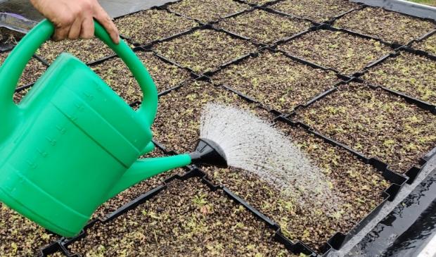Aanleg van een sedum groen dak