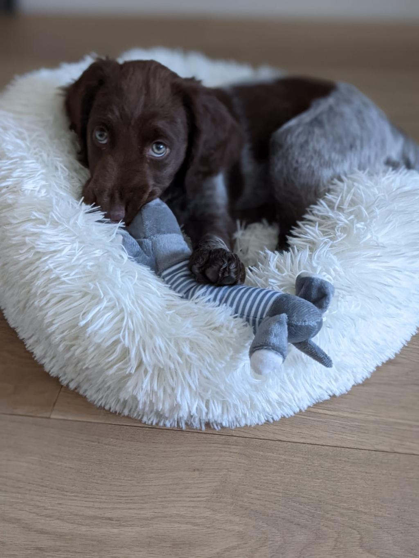 Dit is naast de mooiste ook de liefste foto van mijn heidewachtel pup Joni. José Morsing © BDU media