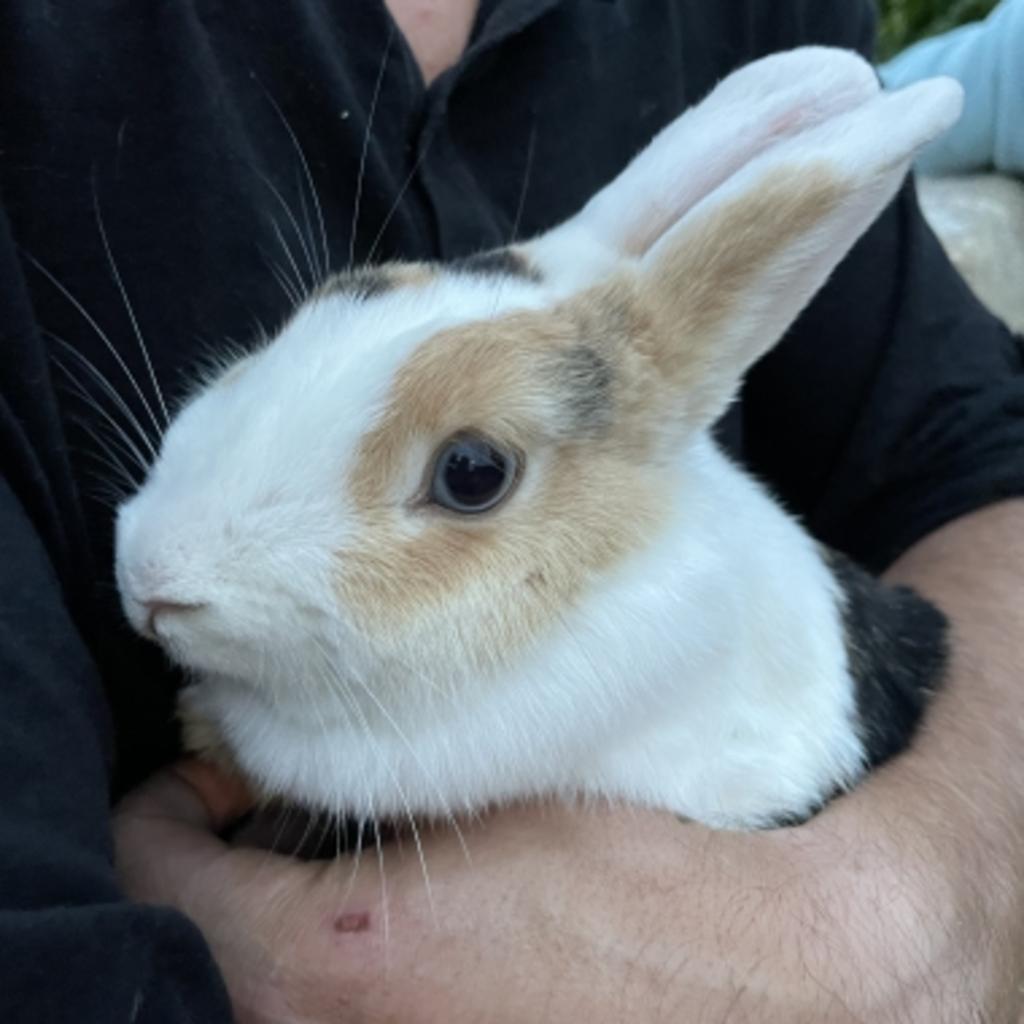 Gevonden konijn Esdoornlaan Putten Vinder © BDU media