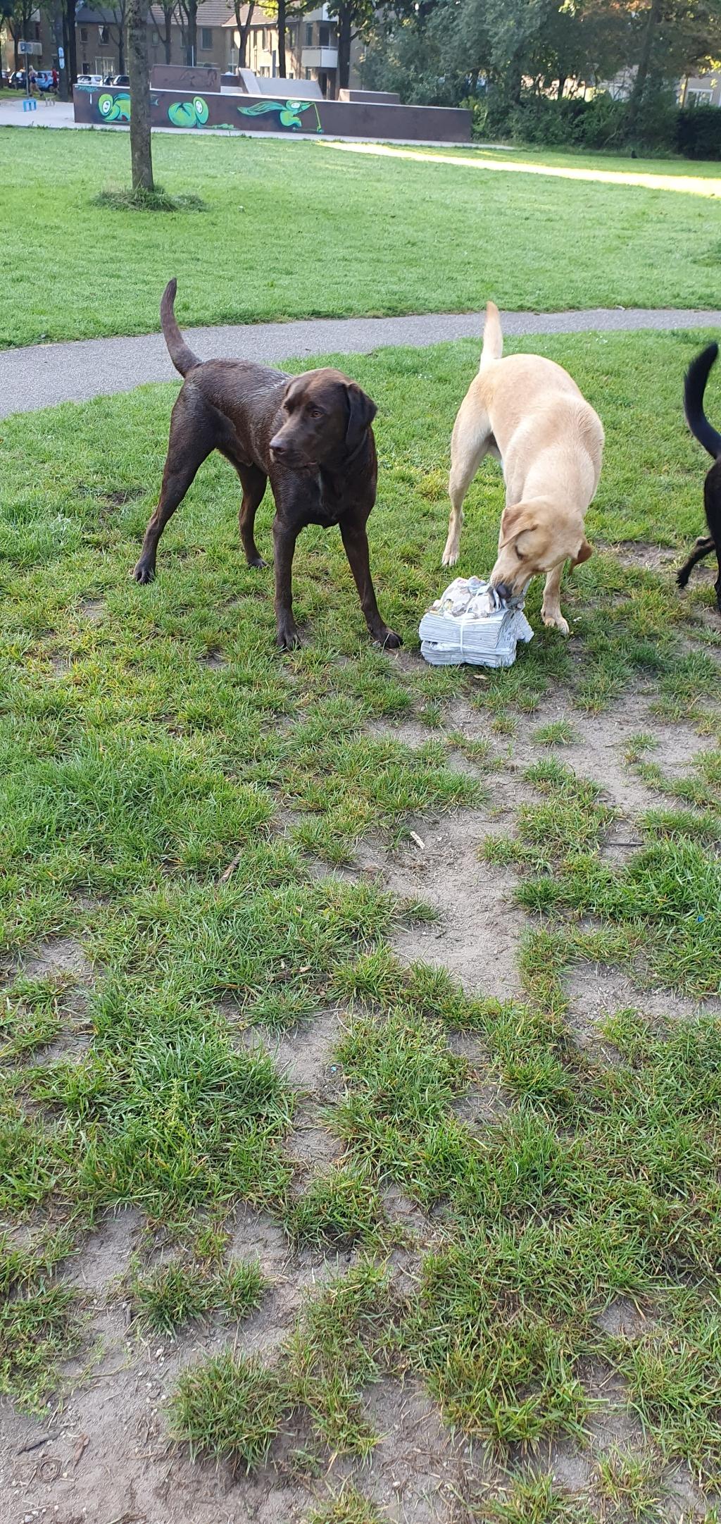 Honden Kim van Mildert © BDU media