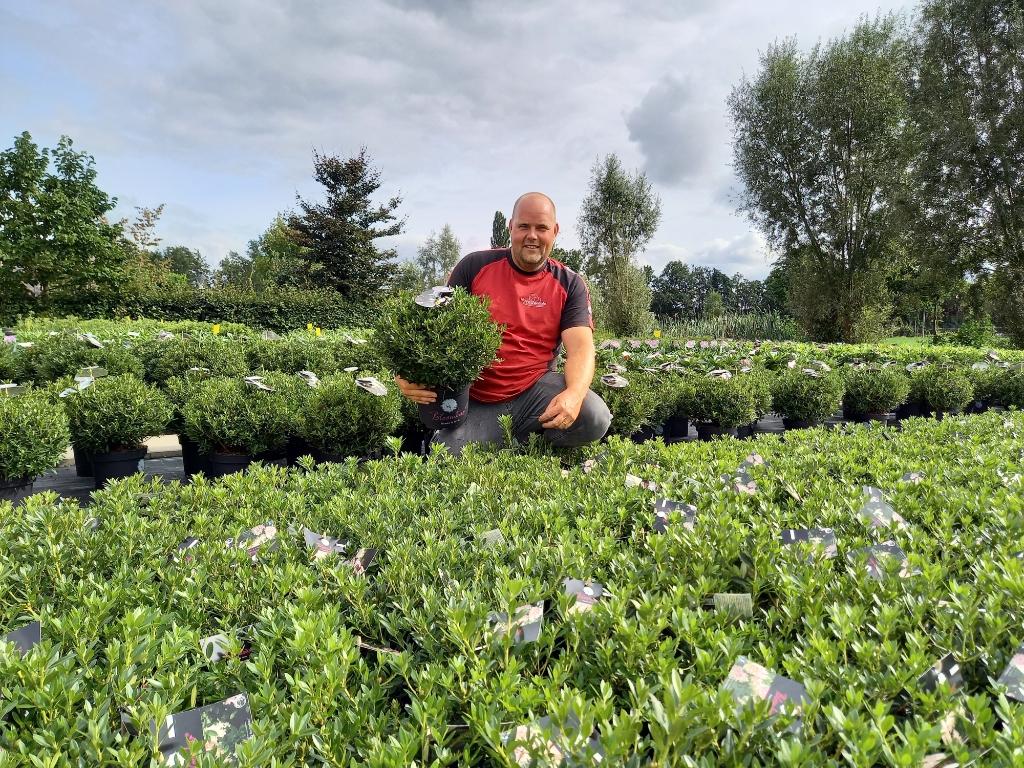 Erwin Adams tussen de Bloombux. Kwekerij Nova Zembla © BDU media