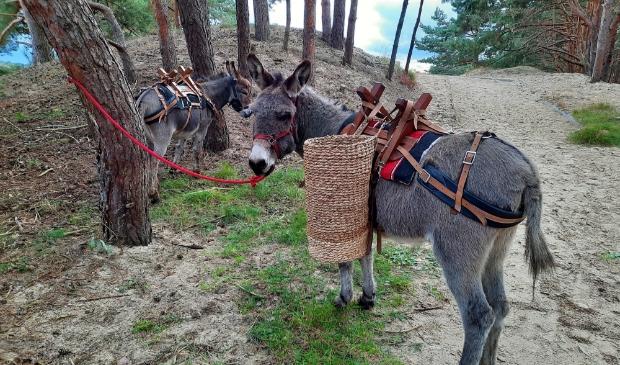 De ezels bij het uitkijkpunt Hulshorsterzand
