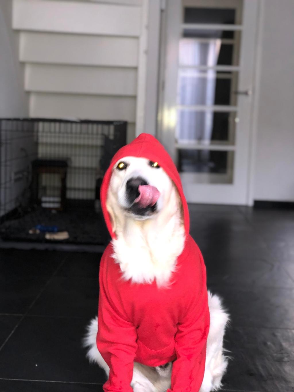 Hierbij een foto van onze lieve hond Boef! Misschien ziet u ook gelijk waarom wij hem Boef hebben genoemd! Semma Smit © BDU media