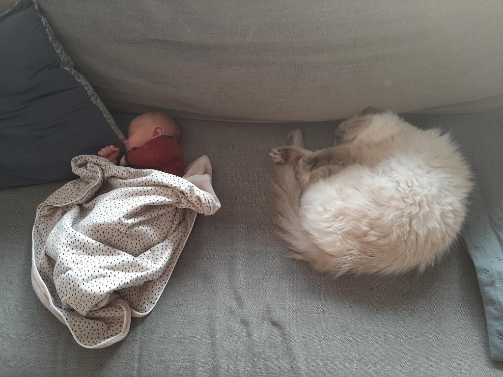 Hier een leuke foto van onze kat Ties met Lenn nu 12 weken oud. Joline Huygen © BDU media