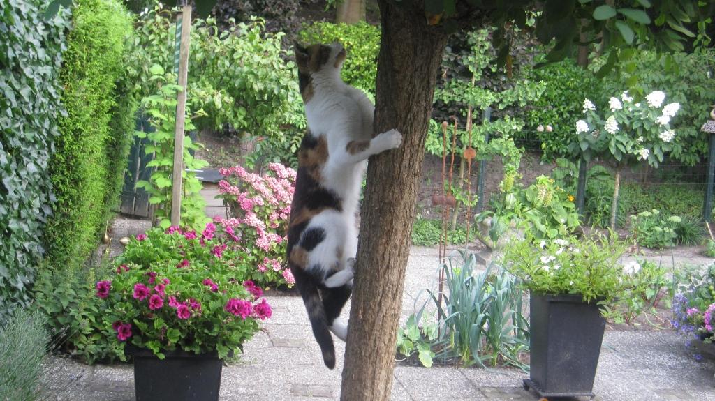 Dit onze acrobaat Jessica en onze Floortje is een beetje een bange poes. Greet Fransen © BDU media