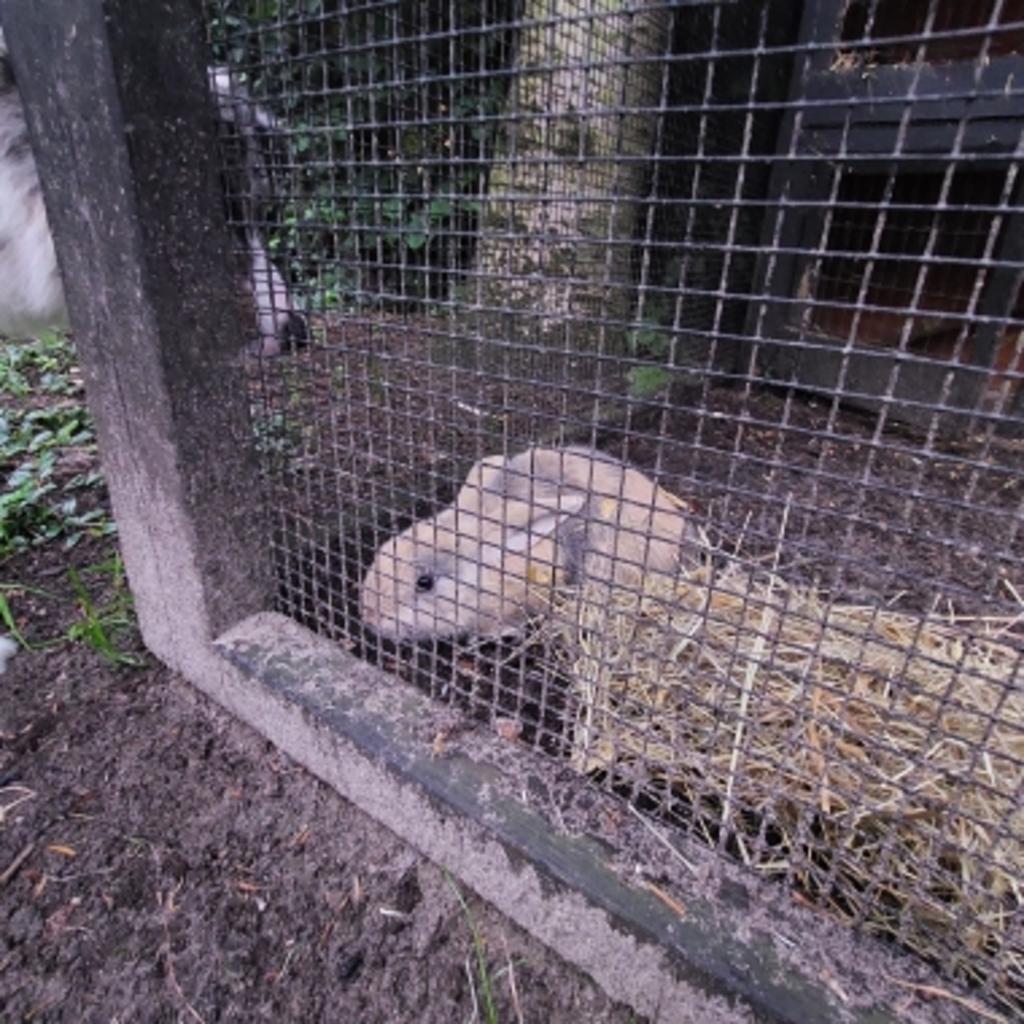 Gevonden konijn Jozef Israëlshof Nijkerk Vinder © BDU Media