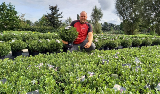 <p>Erwin Adams tussen de Bloombux. Het assortiment van Nova Zembla bestaat verder uit tientallen soorten rhododendrons en azalea&#39;s.</p>
