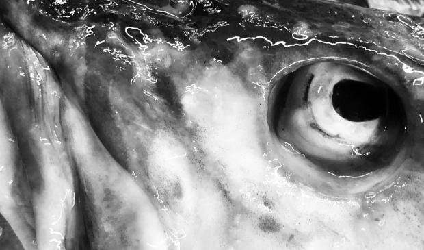 De ogen van een vis vertellen een een verhaal.