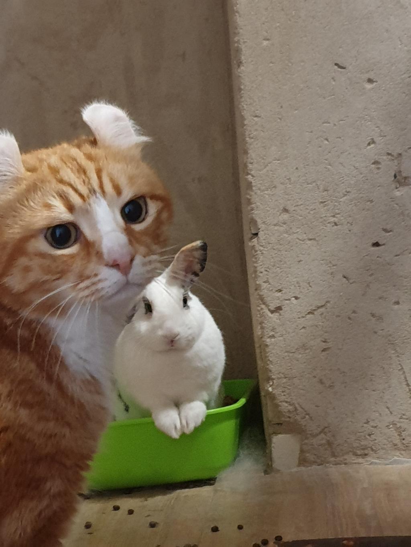 Hoi dit is vito de kat en konijn elif  Elif is erg verliefd op vito maar vito vind elif maar helemaal niks. Daarom vind ik deze foto het leukst omdat je op zijn gezicht zie van help elif is achter me run s wolfsen © BDU media