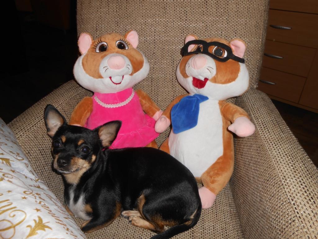 Roos, de hond van mijn vriendin samen met de Hamsters van A.H. D. Jansen © BDU media