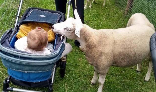 baby met schaap