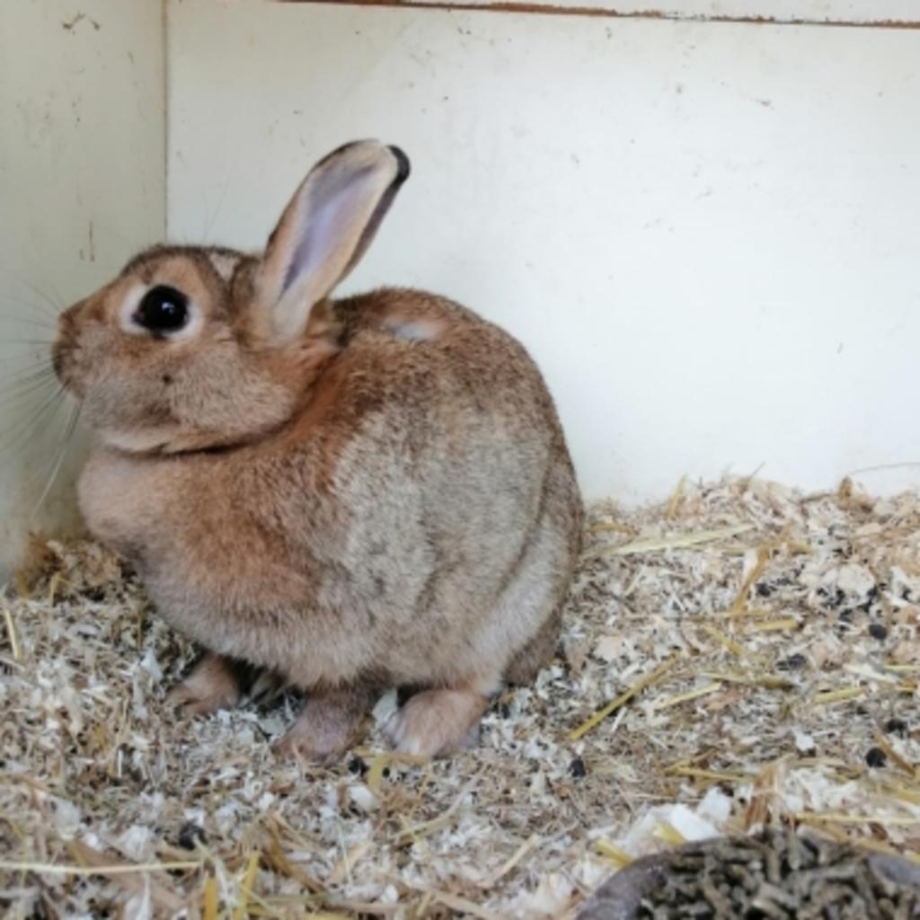 Gevonden konijn Smidsplein Voorthuizen Vinder © BDU media