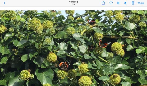Vlinders en bijen