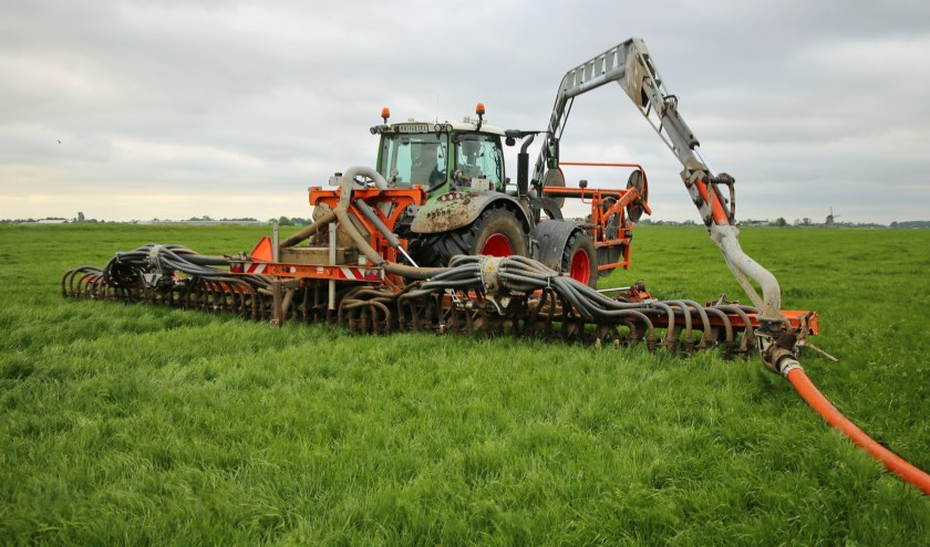 In Nederland is de belangrijkste bron van stikstof de landbouw; ammoniak slaat dichtbij de bron neer. (Foto: Eddy Teenstra)
