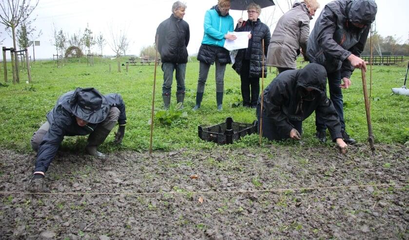 Regen of geen regen, de tulpenbollen gingen zaterdag de grond in. (foto en tekst: Erik van Leeuwen)
