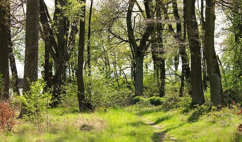 Een tiny forest is een bos ter grootte van een tennisbaan.