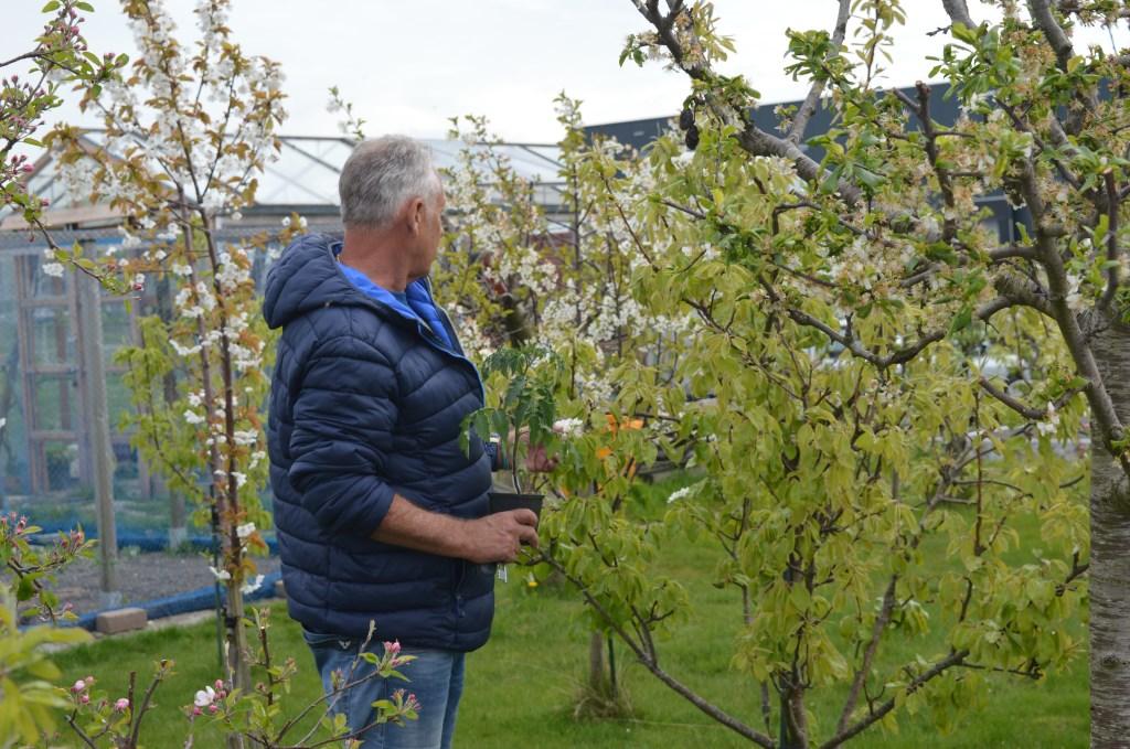 Imker Erik Tempelaars inspecteert zijn bloeiende fruitbomen, onmisbaar voor zijn bijen.  © HvH Waddinxveen