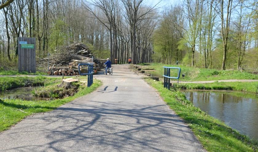 In het voorjaar zijn de populieren langs de laan gekapt.