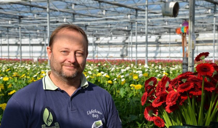 Berry den Houter in zijn kas waar duizenden gerbera's in alle kleuren groeien. (Tekst en foto: Myriam Dijck)