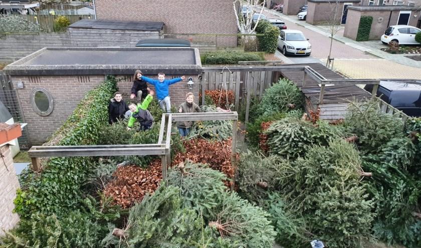 Tygo en Justin Springvloet (met felgekleurde jassen) zamelden samen met de kinderen van De Boer circa170 kerstbomen in. (foto: Jasmijn Springvloet)