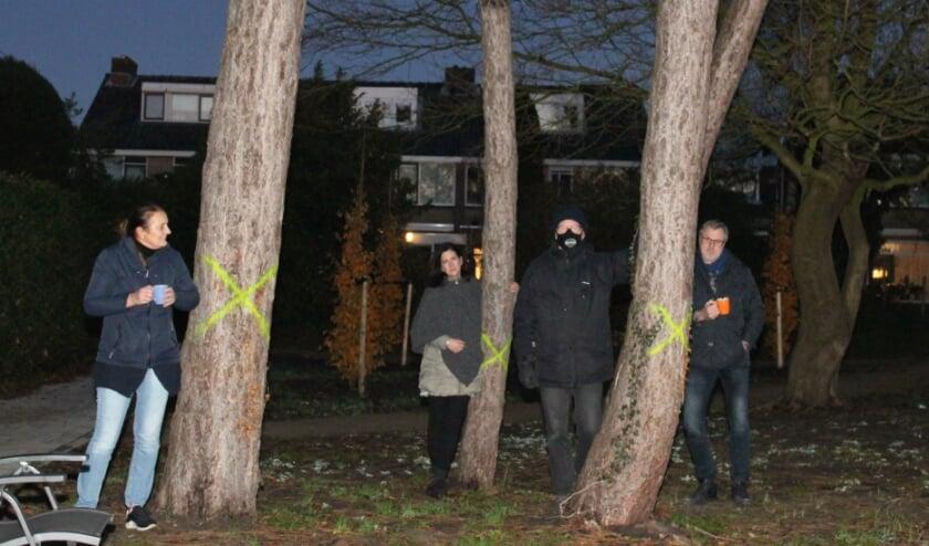 <p>De wake bij de naaldbomen in Zevenhuizen.</p>
