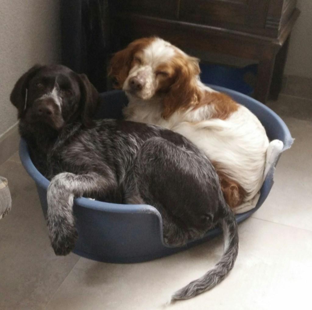 Foto: Huisdierenactie © MooiBoxtel