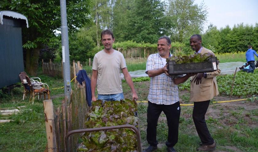 Wethouder Peter van de Wiel helpt mee de eerste sla te oogsten.   | Fotonummer: c2b778