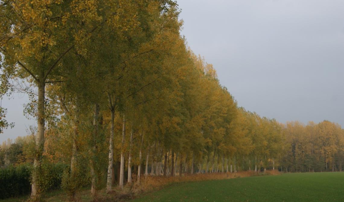 Boxtel werkt al sinds 2017 aan een nieuw Bomenbeleidsplan.