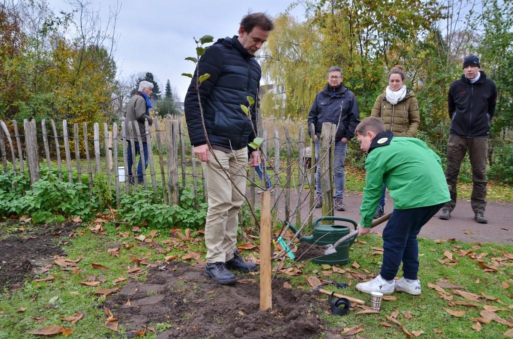 Onder toeziend oog van wethouder Peter van de Wiel plant een scout een jonge fruitboom. Foto: Jan van der Steen © MooiBoxtel