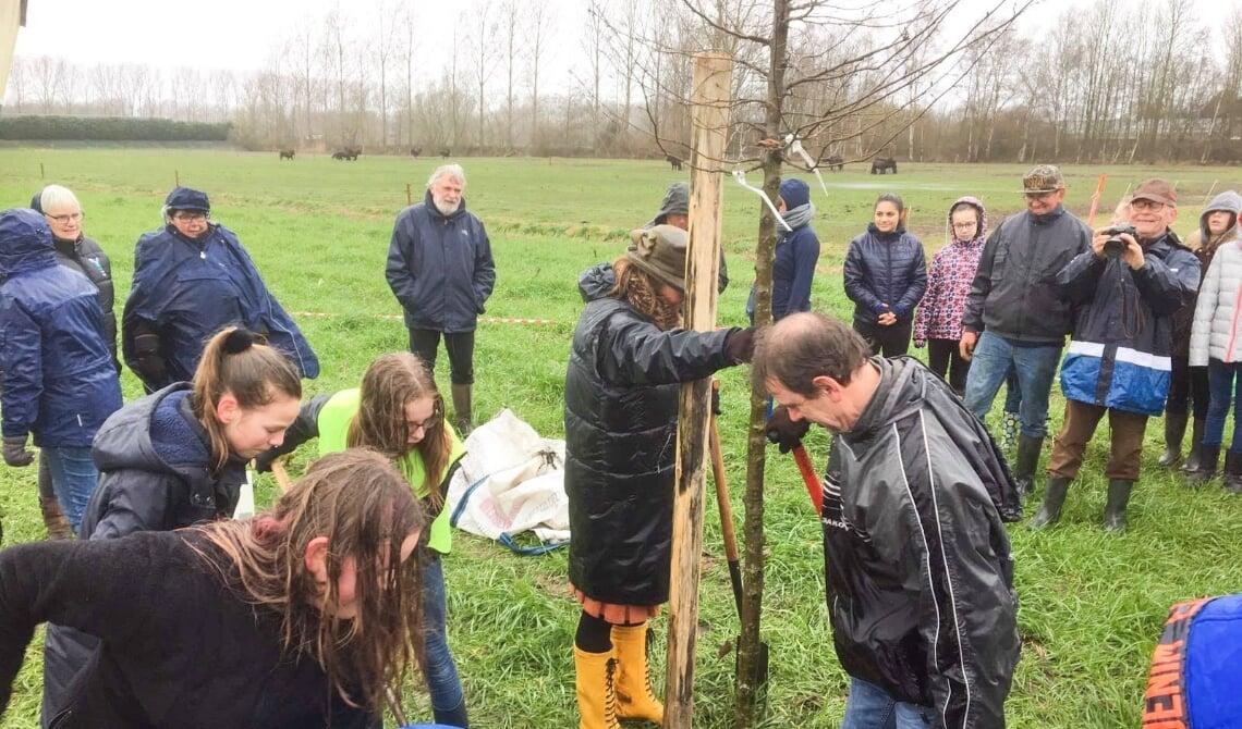 <p>Wethouder Peter van de Wiel helpt een leerling van De Oversteek een boom te planten. (Foto: Gemeente Boxtel)</p>