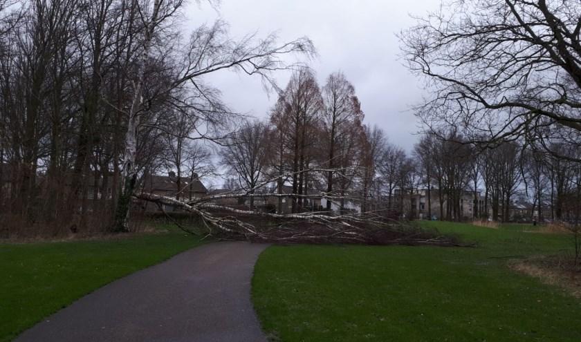 Zo erg als in 2018, toen omgeknakte bomen verschillende wegen versperden werd het afgelopen zondag niet.   | Fotonummer: cf663e