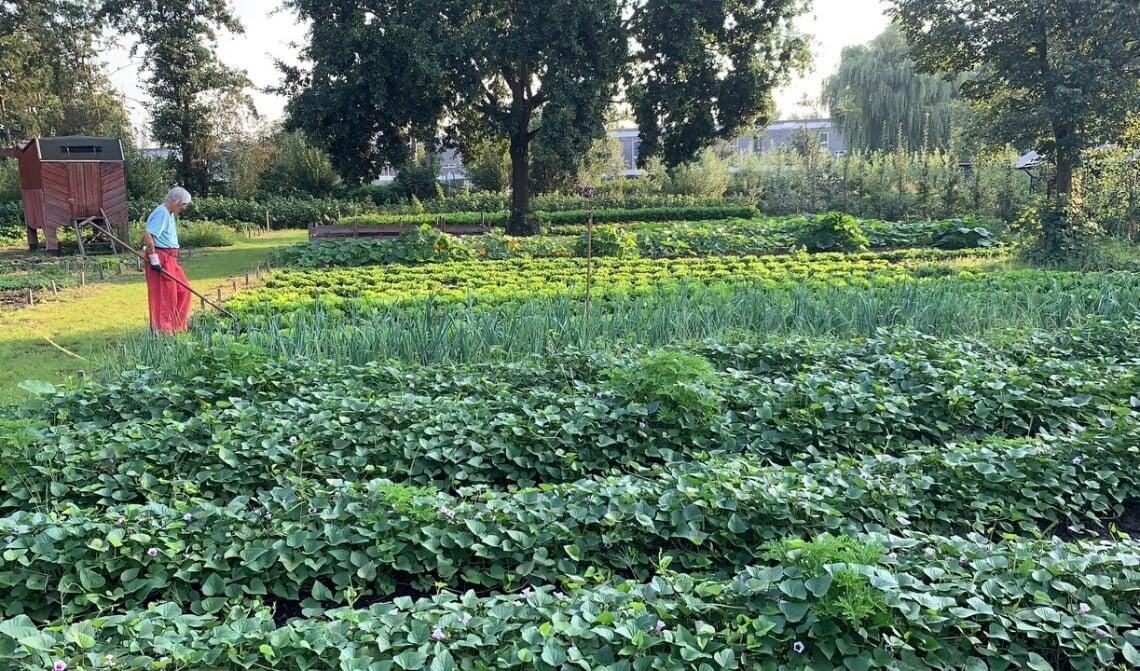 De kern van het vernieuwde elan voor De Kleine Aarde is het succes van de formule van de Voedseltuin.