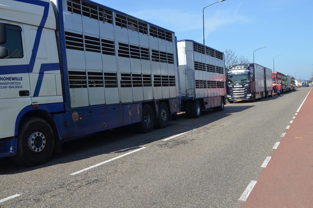Al snel ontstond een file van vrachtwagens bij de ingang van de slachterij. Foto: Marie Fick/Persburo Sander van Gils © MooiBoxtel