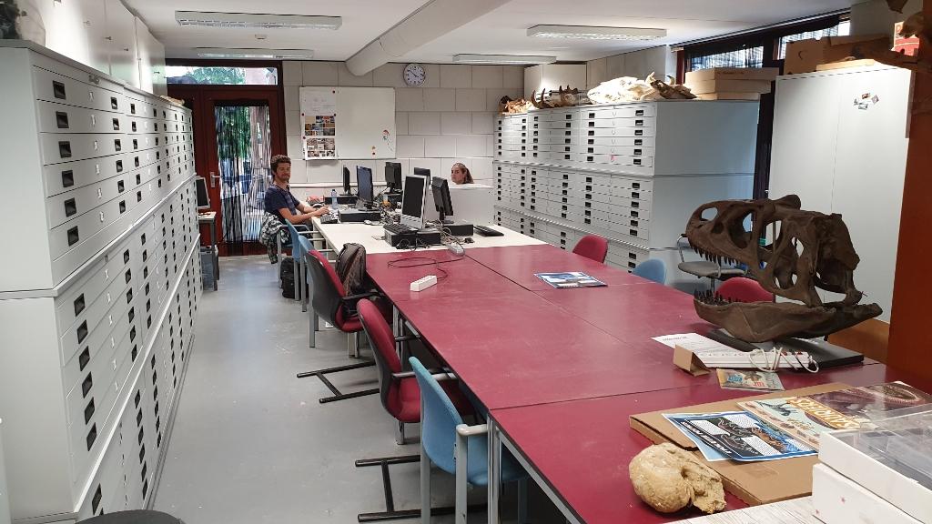 Bij het Oertijdmuseum werken regelmatig stagiaires die blijven 'plakken'. Foto: Oertijdmuseum Boxtel © MooiBoxtel