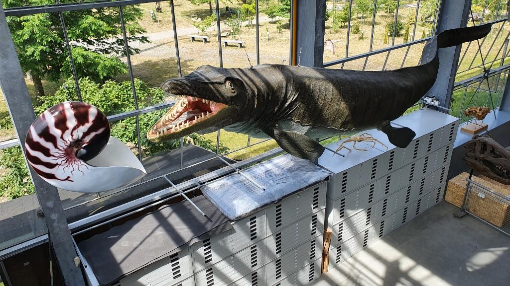 In het Oertijdmuseum zijn diverse levensechte dino-replica's te zien mede dankzij het werk van de stagiaires. Foto:  © MooiBoxtel