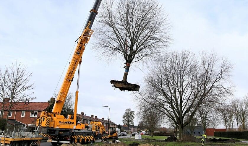 Er is al een boom verplaatst voor de nieuwe kerk, maar de bouw loopt vertraging op (Foto Rien Burgers).