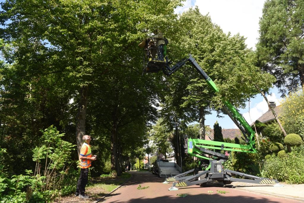 Jaap van Popering zit bovenin de boom met de hoogwerker. Links Jo Ridderhof van de gemeente.   © Eendrachtbode