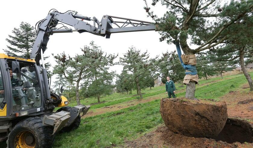 Het gaat om deze speciale boom   | Fotonummer: eafff2