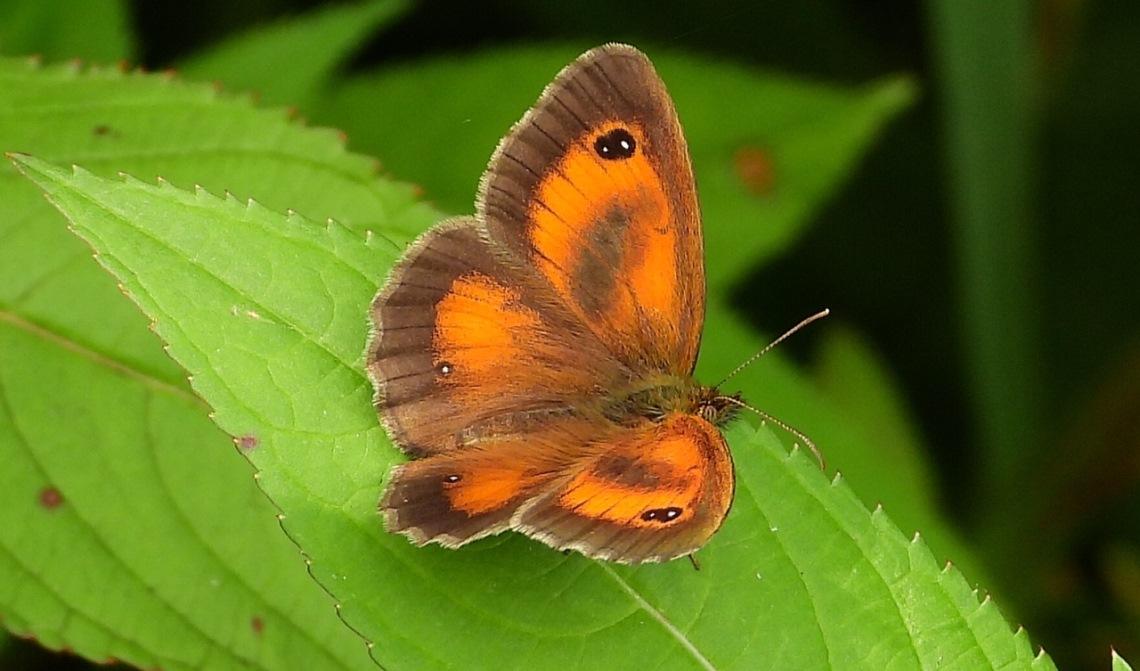 Wat een prachtige vlinder!